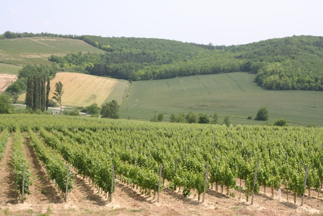 A legfinomabb borokat ihatja Etyeken!
